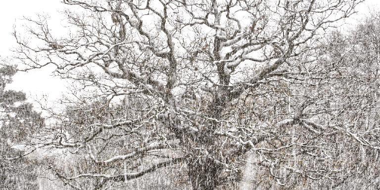 Tree in Snow - credit: Yang-May Ooi