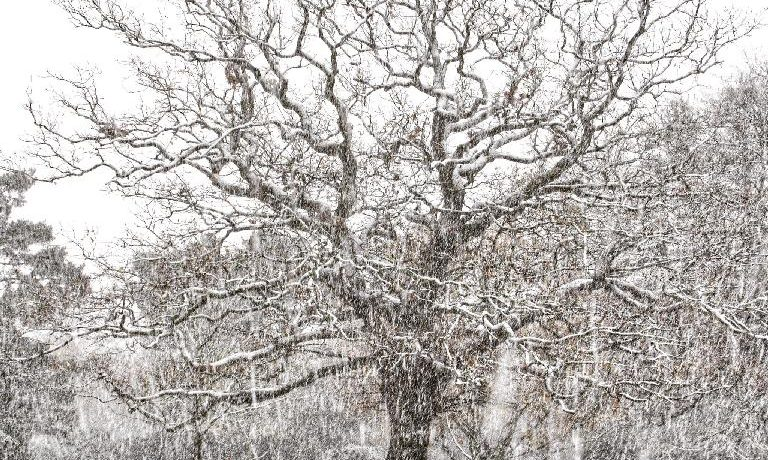 Tree in Snow - credit: Yang-May Ooi