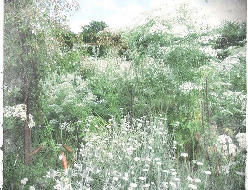 The White Garden, Sissinghurst - by Yang-May Ooi, to illustrate a blogpost on timelessness