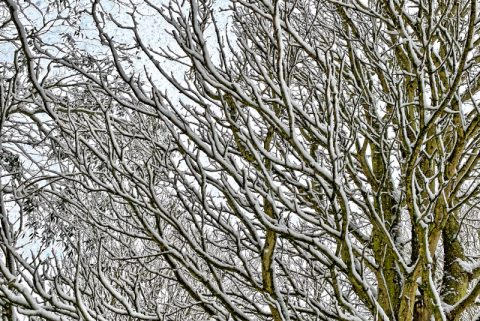 Trees in Snow to illustrate Is My Wardrobe Enchanted? by Yang-May Ooi in her Oxford Moments blog